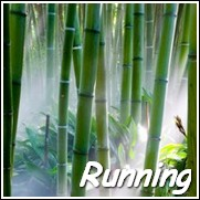 Punting Pole Bamboo Plants