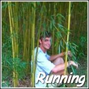 Vivax Bamboo Plants Plants