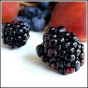 Shawnee Blackberry Plant