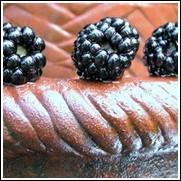 Elephant Blackberry Plant