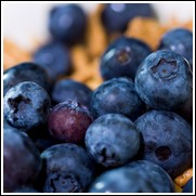 Buy Blueberry Plant For Sale At The Lowest Prices At Ty Ty