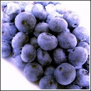 Briteblue Blueberry Plant