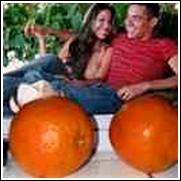 Clementine Orange Tree