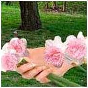 Pink Charm Daffodil Bulb
