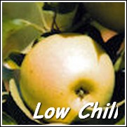 Ein Shemer Apple Tree