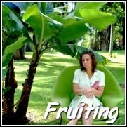 Brazilian Dwarf Banana Tree