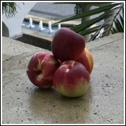 Red Chief Nectarine Tree