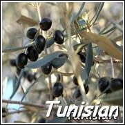 Chemlali Olive Tree