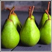 Ayers Sugar Pear Tree