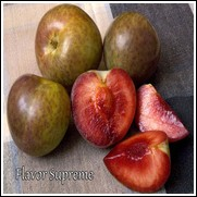 Buy Flavor Supreme Pluot Trees