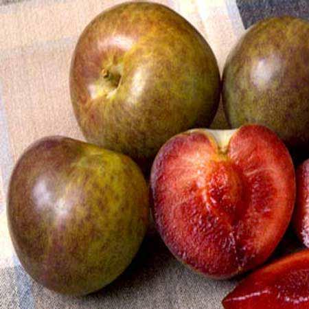 Flavor Supreme Pluot Trees