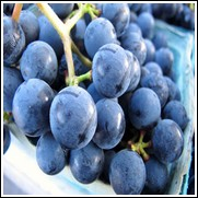 Thomcord Seedless Grape Vine
