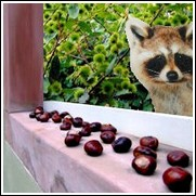 Wildlife Chestnut Tree