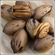 Buy Caddo Pecan Trees