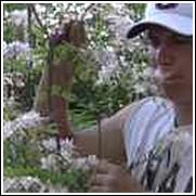 Piedmont White Native Azalea Shrub